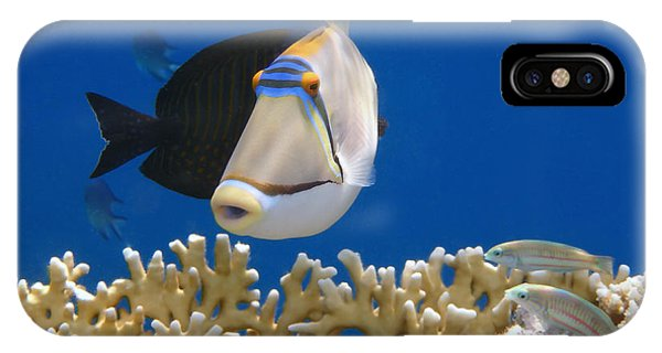 Picasso Fish And Klunzingerwrasse IPhone Case