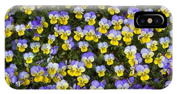 Pick Me-pansies IPhone Case