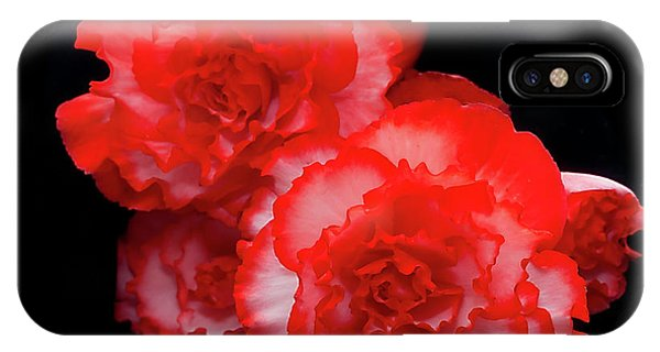 Picotee Begonia IPhone Case