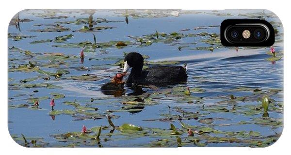Pied Billed Grebe Lake John Swa Co IPhone Case
