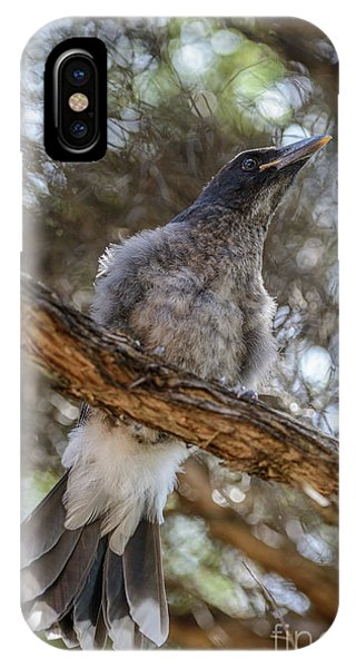 Pied Currawong Chick 1 IPhone Case