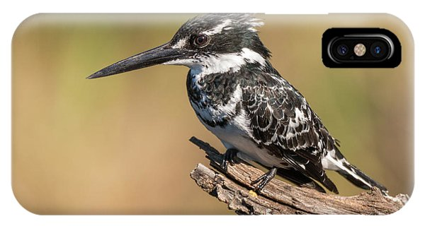Pied Kingfisher IPhone Case