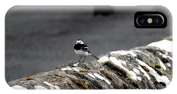Pied Wagtail IPhone Case