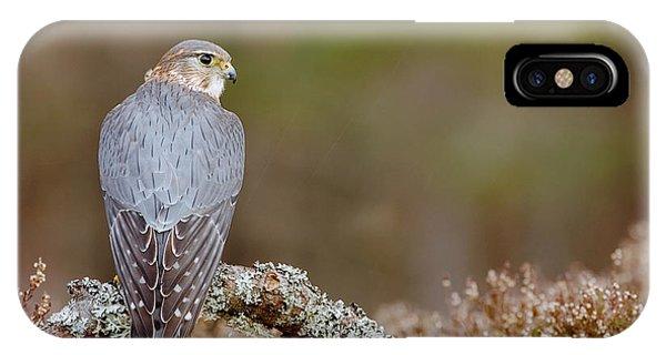 Pigeon iPhone Case - Pigeon Hawk by Emma Brown