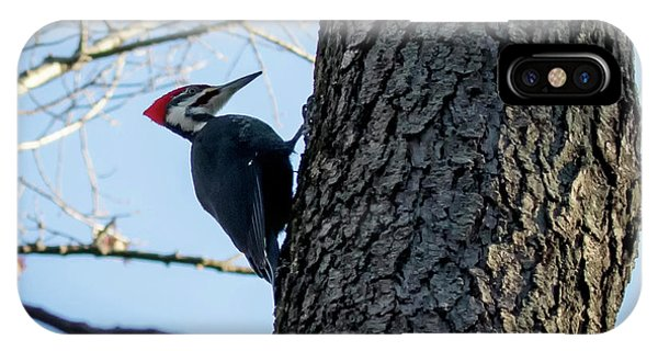 IPhone Case featuring the photograph Pileated Woodpecker  by Ricky L Jones