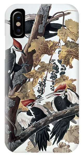 Pileated Woodpeckers IPhone Case