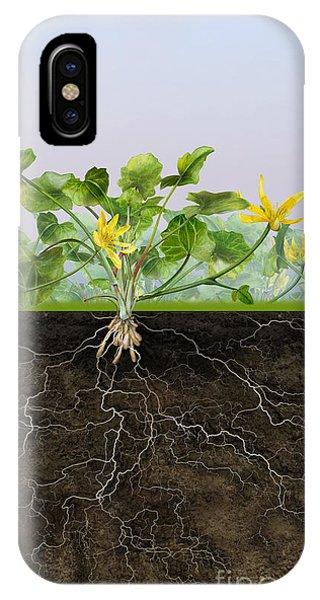 Pilewort Or Lesser Celandine Ranunculus Ficaria - Root System -  IPhone Case