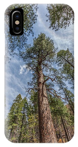 Pine Cathedral On The West Fork IPhone Case