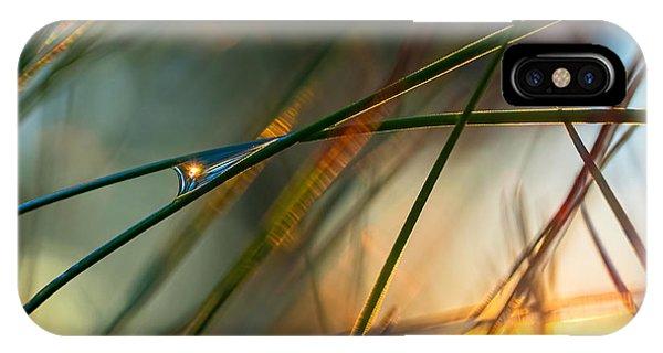Pine Needle Sunset IPhone Case