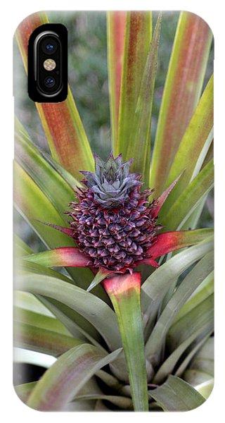 Pineapple, Oahu IPhone Case