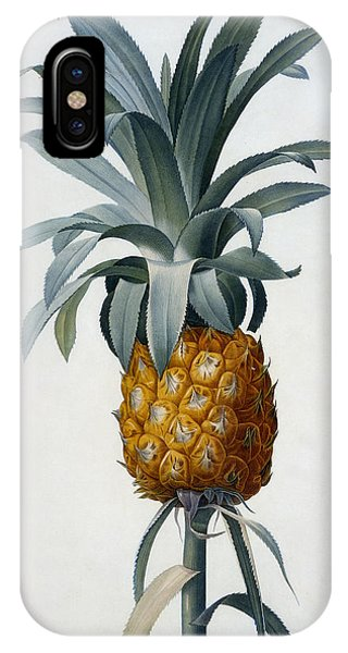 Redoute iPhone Case - Pineapple by Pierre Joseph Redoute