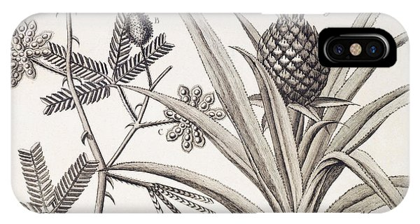 Organic iPhone Case - Pineapple Plant by Denis Diderot