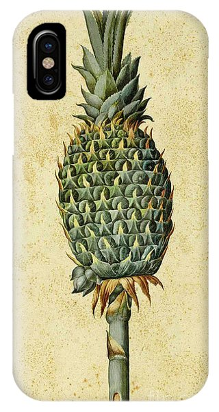 Organic iPhone Case - Pineapple by Ulisse Aldrovandi