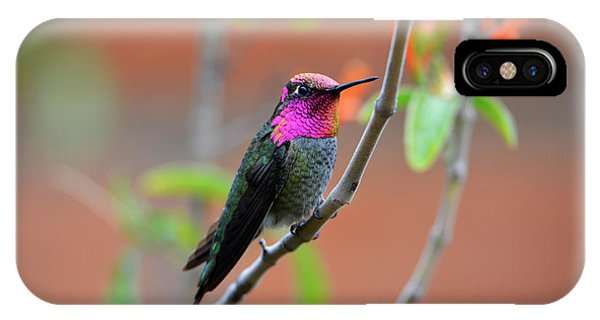 Pink And Gold Anna's Hummingbird IPhone Case