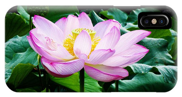 Pink And Green Floral Garden Ballet 11u Lotus Bloom IPhone Case