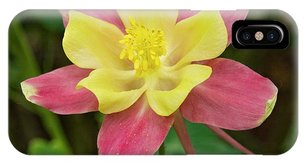 Pink And Yellow Columbine IPhone Case