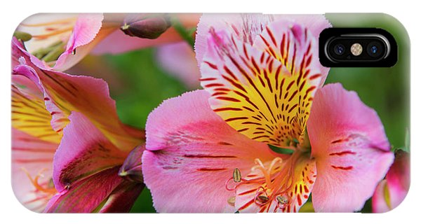 Pink And Yellow Flora IPhone Case