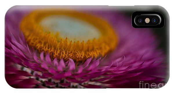 Pink And Yellow Strawflower Close-up IPhone Case