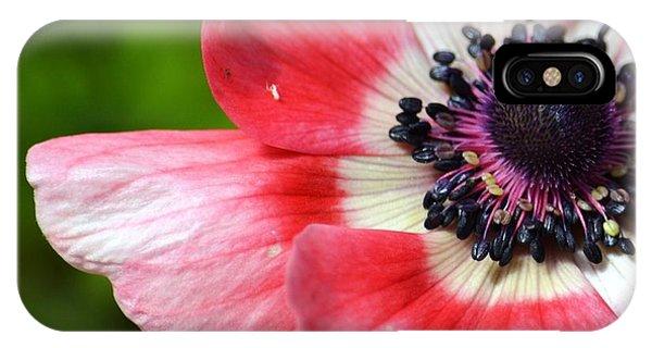 Pink Anemone Flower IPhone Case