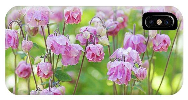 Aquilegia iPhone Case - Pink Aquilegia Flowers by Tim Gainey