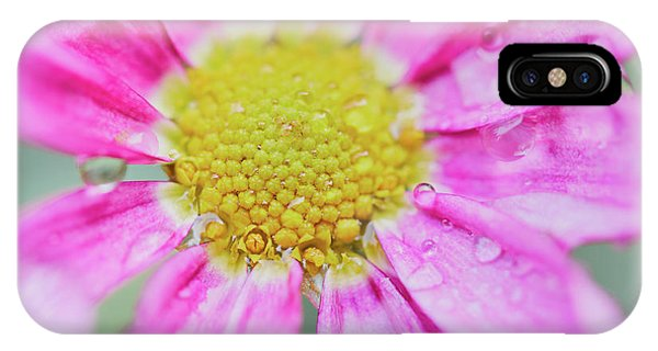 IPhone Case featuring the photograph Pink Aster Flower With Raindrops by Nick Biemans