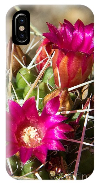iPhone Case - Pink Barrel Cactus Flowers by Kelly Holm