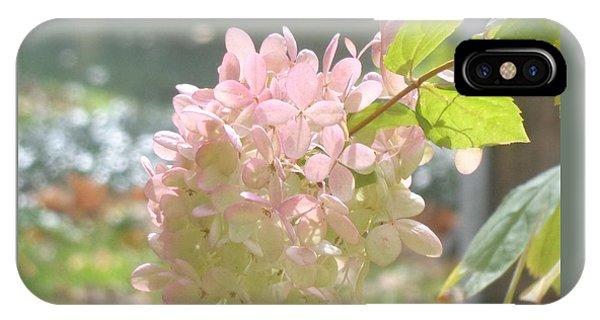 Pink Bloom In Sun IPhone Case