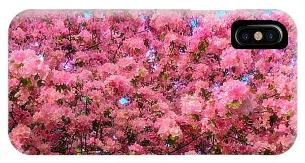Pink Blossoms Of Spring IPhone Case