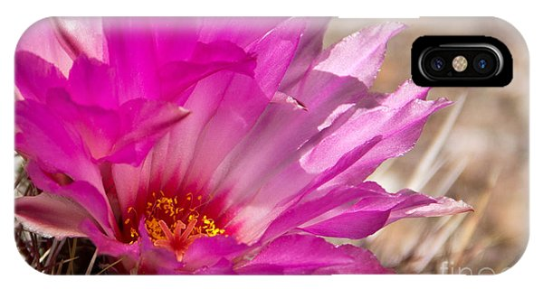 iPhone Case - Pink Cactus Flower by Kelly Holm