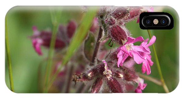 Pink Campion In August IPhone Case