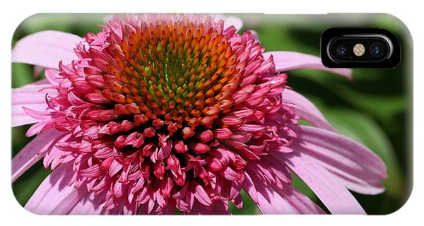Pink Coneflower Close-up IPhone Case