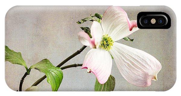 Pink Cornus Kousa Blossom In Creamer IPhone Case