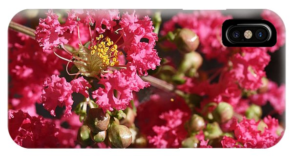 IPhone Case featuring the photograph Pink Crepe Myrtle Flowers by Debi Dalio