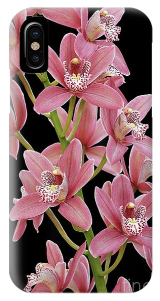 Pink Cymbidium Orchid IPhone Case