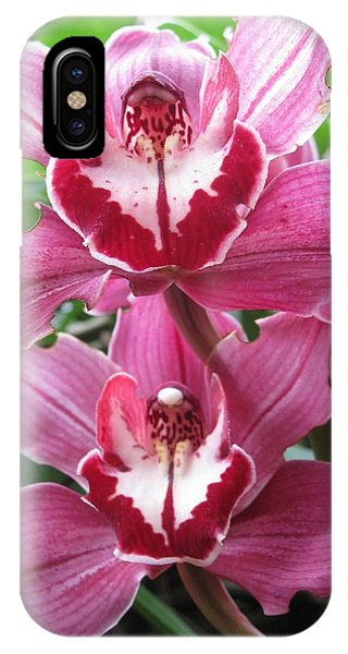 Pink Cymbidium Orchids IPhone Case