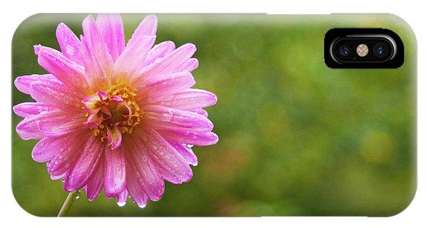 Pink Dahlia 1 IPhone Case
