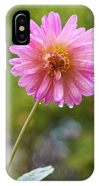Pink Dahlia 2 IPhone Case