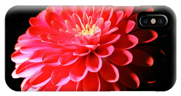 Pink Dahlia1 IPhone Case