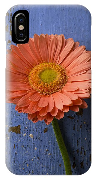 Pink Daisy Against Blue Wall IPhone Case