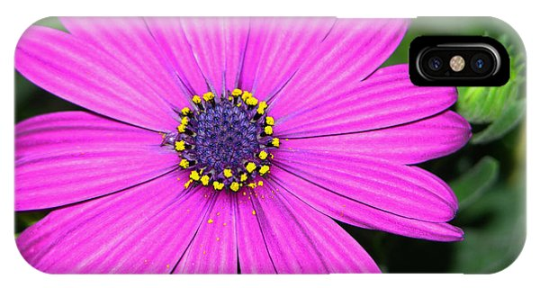 Pink Daisy Phone Case by Dori Peers