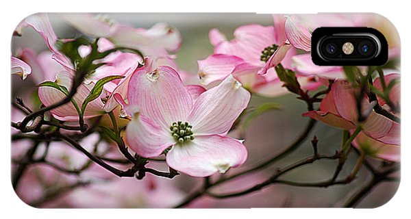 Pink Dogwood 20120415_68a IPhone Case