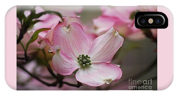 Pink Dogwood 20120415_70a IPhone Case