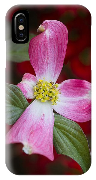 IPhone Case featuring the photograph Pink Dogwood by Ken Barrett