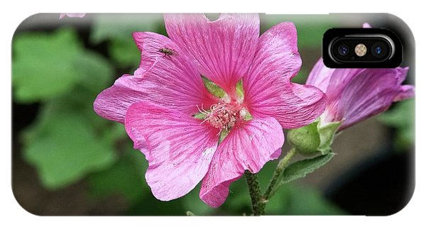 iPhone Case - Pink Flower With Bug. by Bill Linn