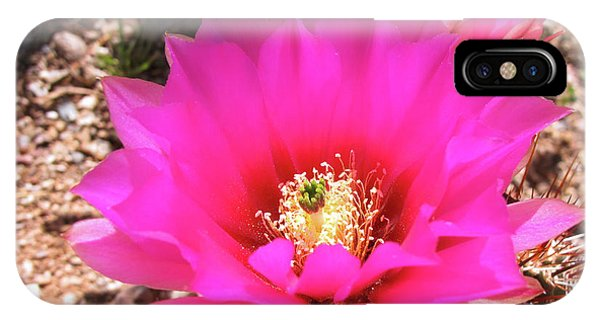 Pink Hedgehog Flower IPhone Case