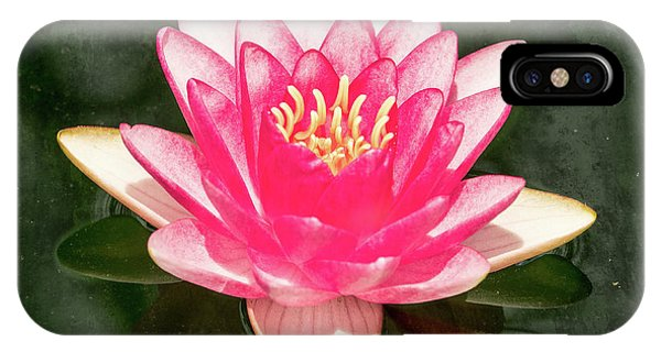 Pink Lily IPhone Case