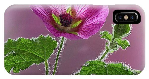Pink Mallow Flower IPhone Case