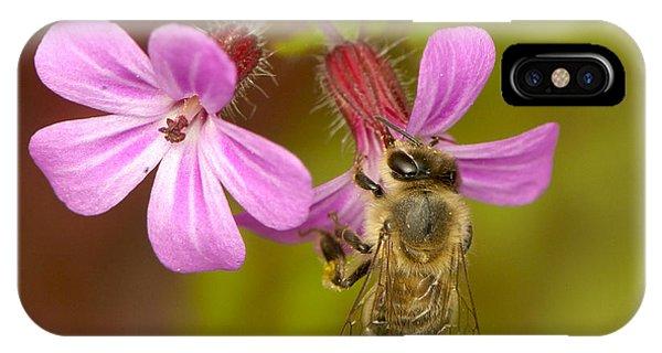 Honeybee iPhone X Case - Pink Nectar by Sharon Talson