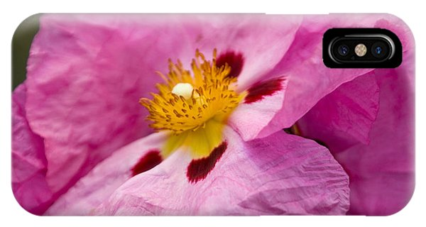 Pink Parchment Flower IPhone Case