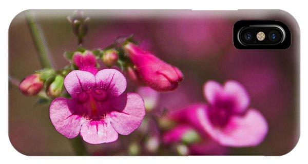 iPhone Case - Pink Parry's Penstemon  by Kelly Holm